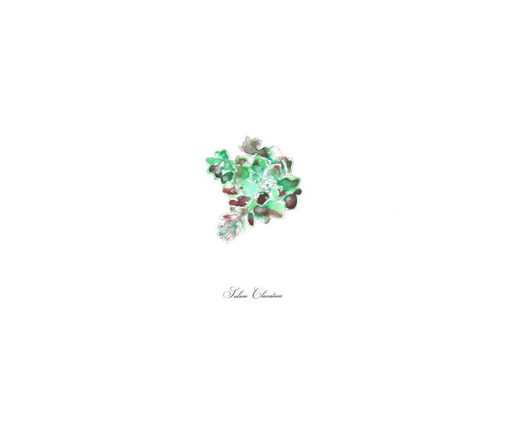 Art-Succulent-Ink_edited-1