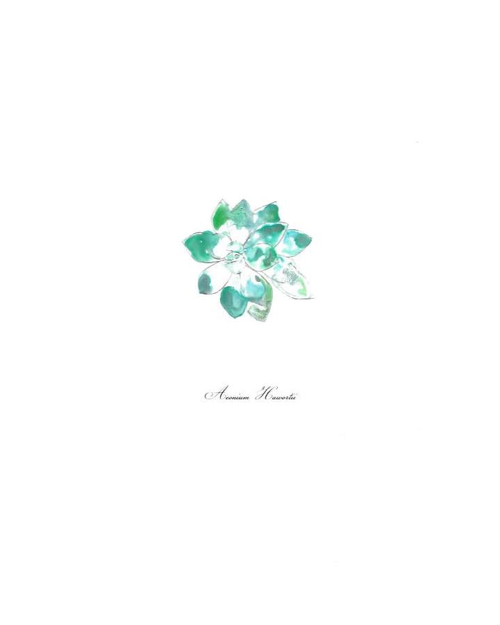 Succulent-Aeonium-Hawortii_edited-1