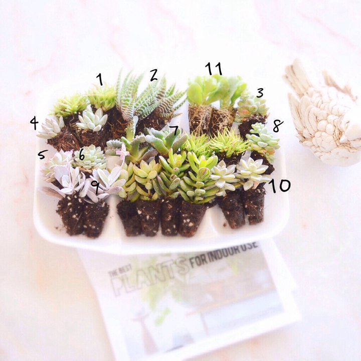 Succulents Numbers Final