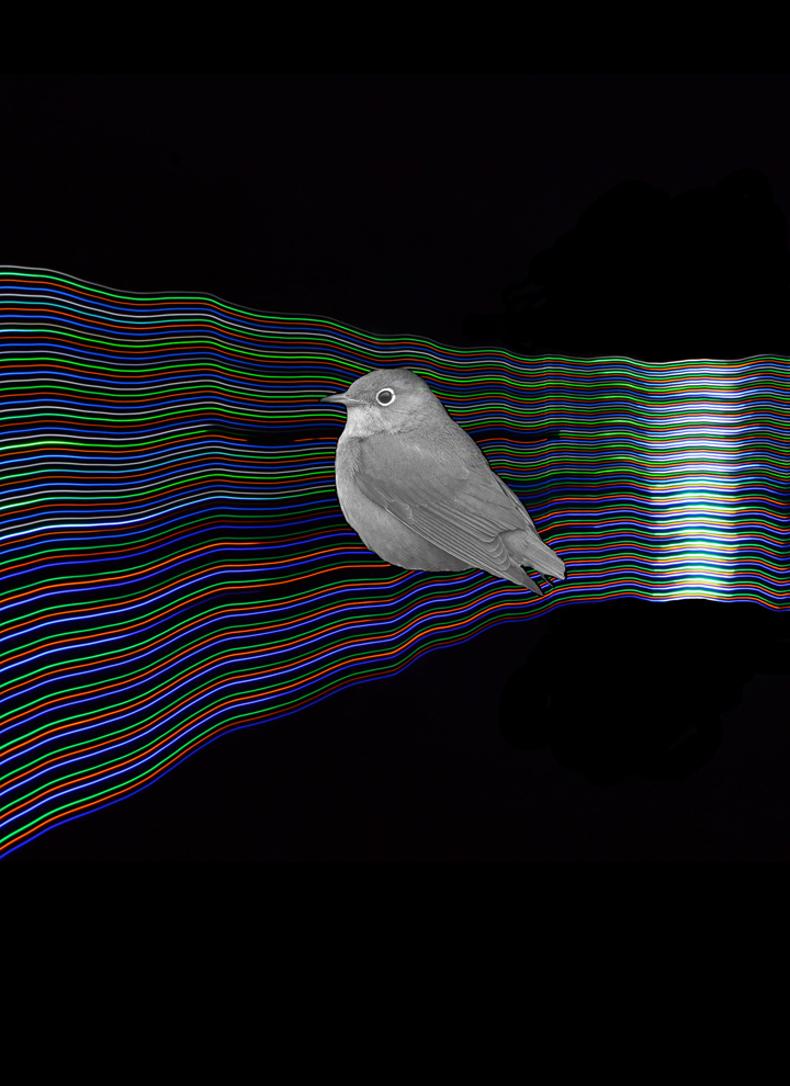 Light-Painting-Warbler