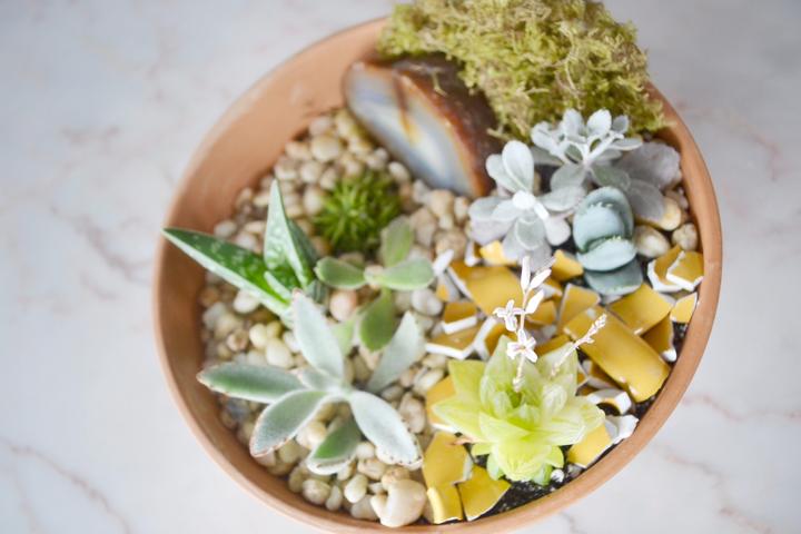 Succulents-11-720pdi