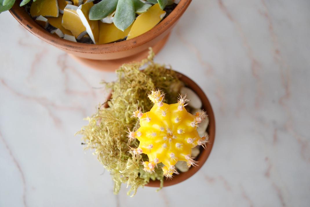 Succulents-12-1070px