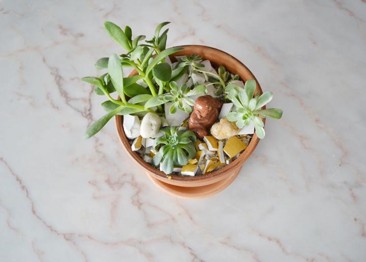 Succulents-13-720px