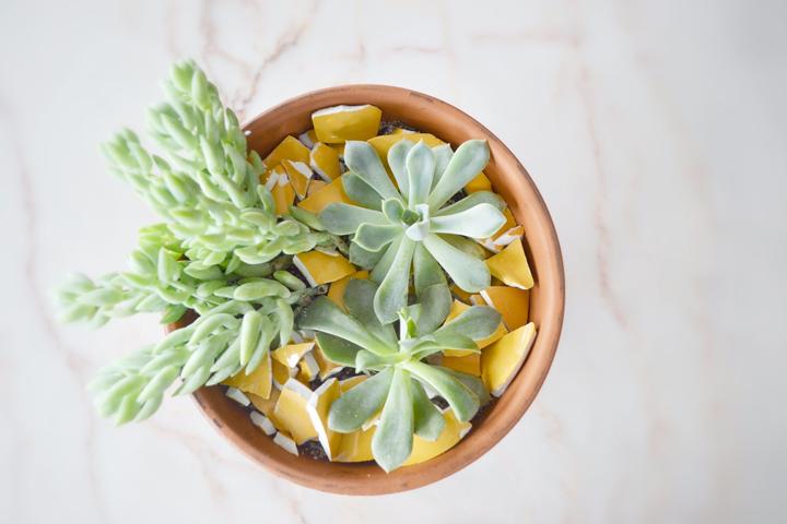 Succulents-14-720px
