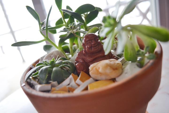 Succulents-15-720px