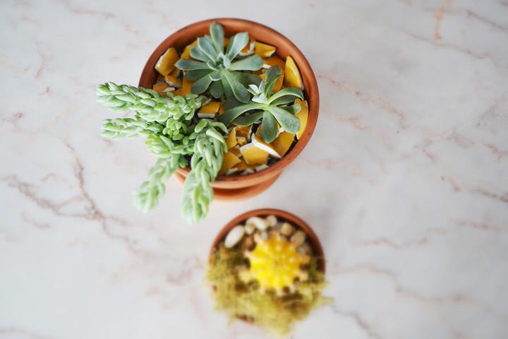 Succulents-16-720px