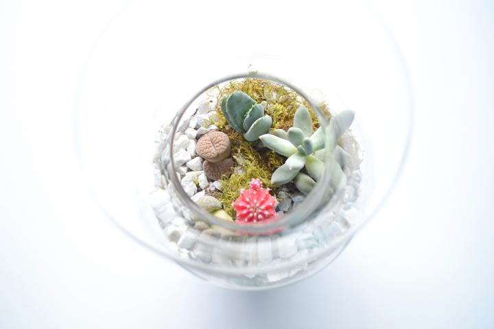 Succulents-2-720px