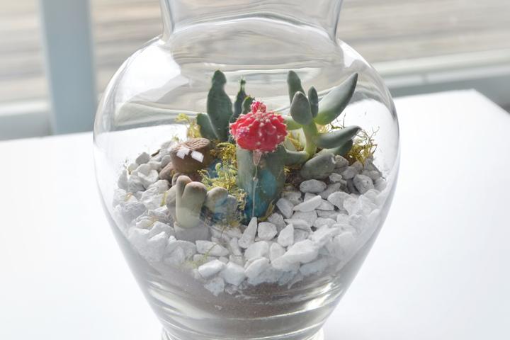 Succulents-4-720px