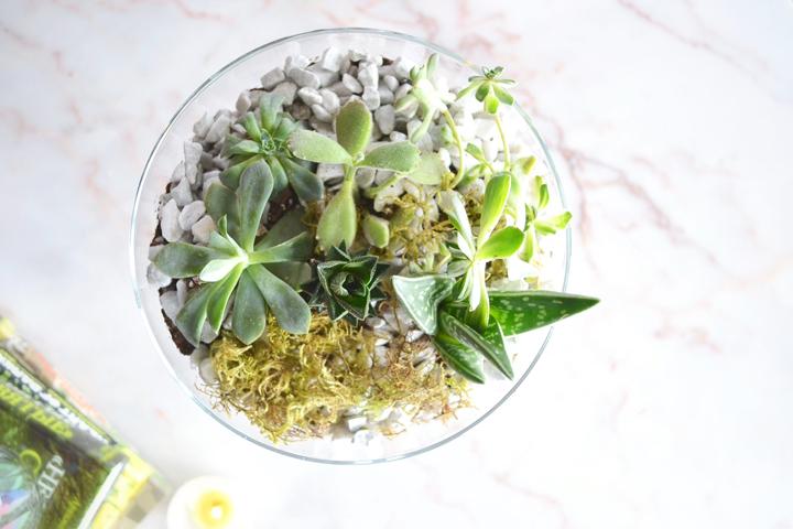 Succulents-5-720px