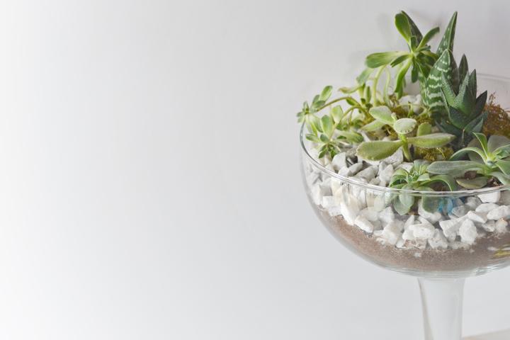 Succulents-7-720px