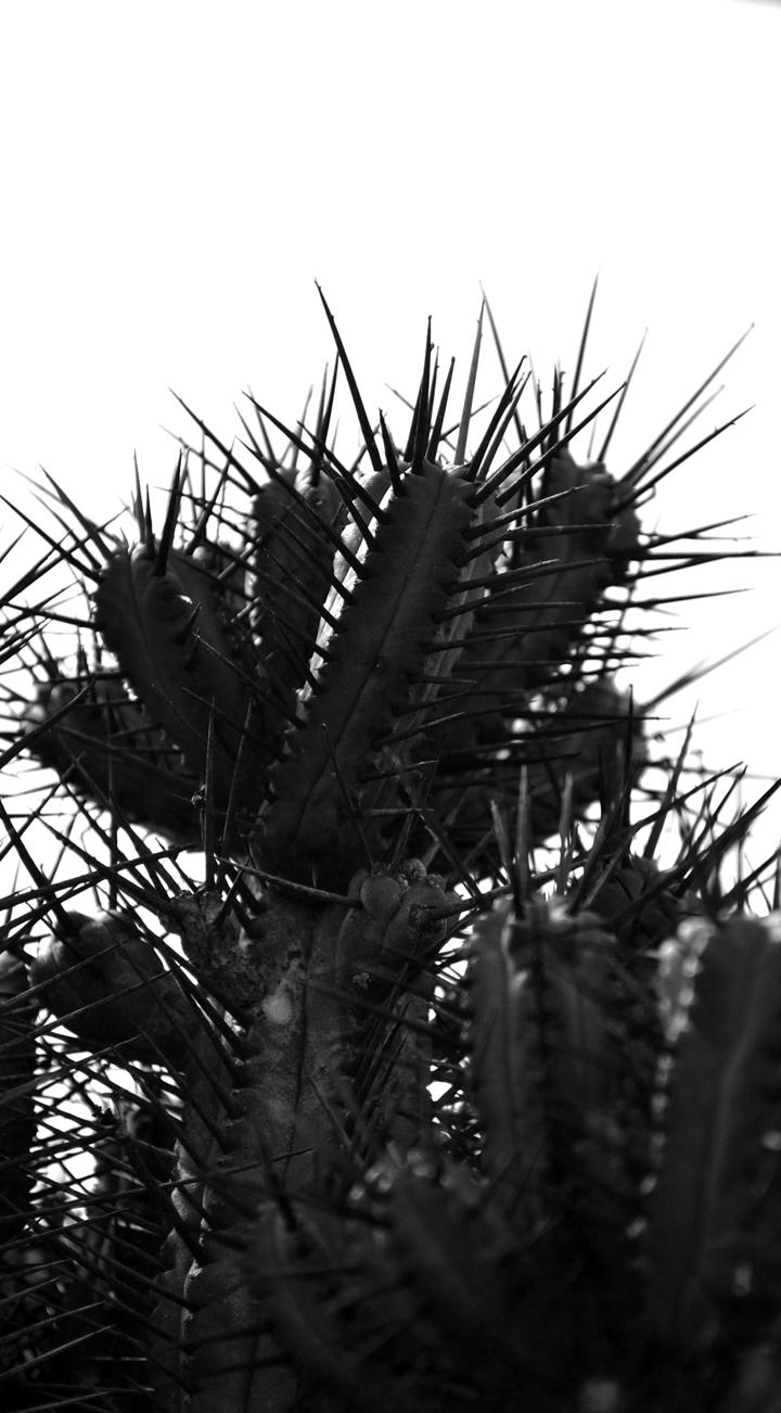 Cactus-41