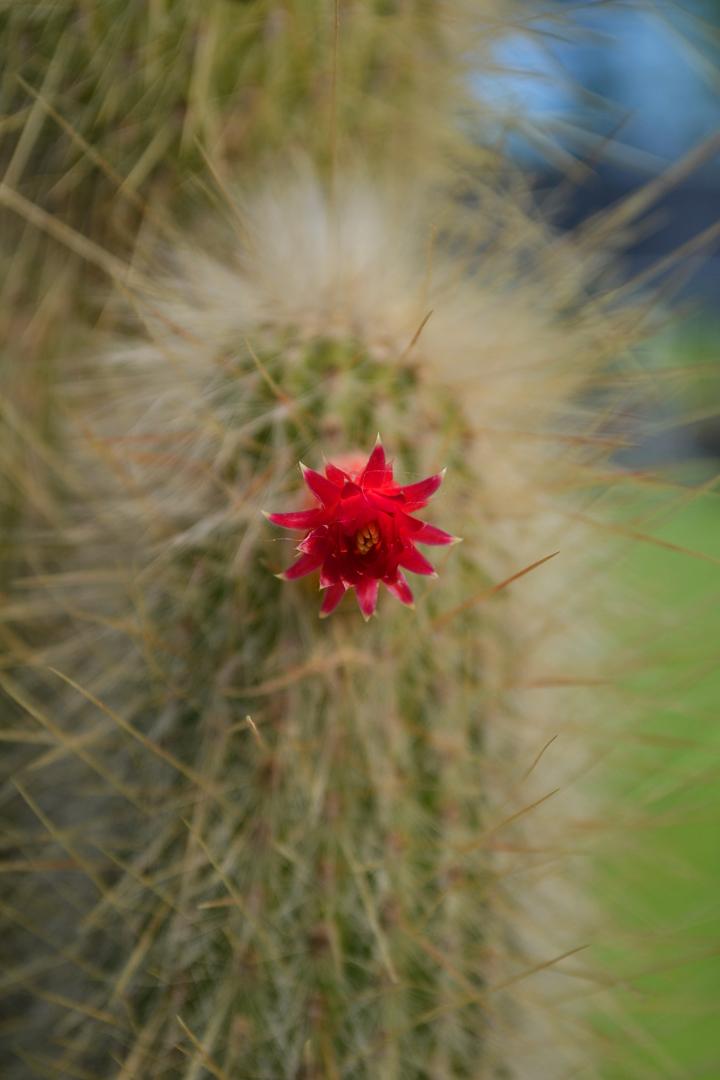 Cactus-42