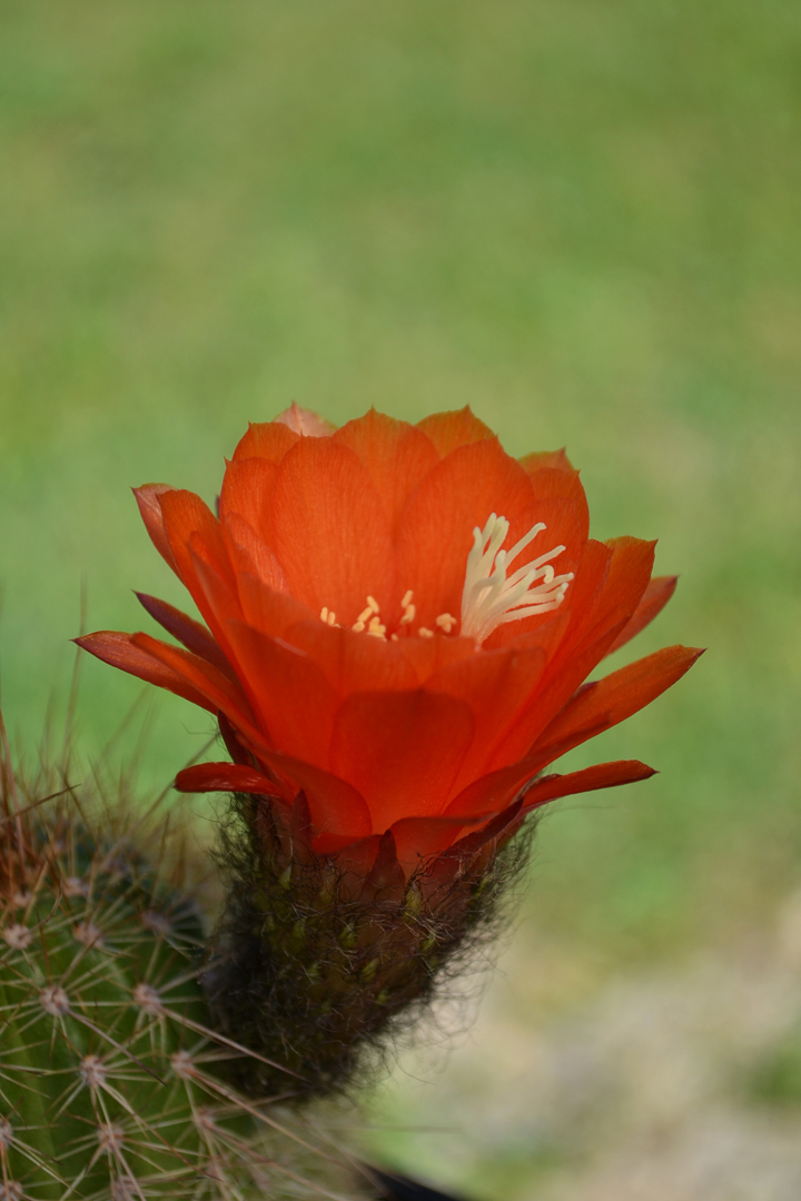 Cactus-43
