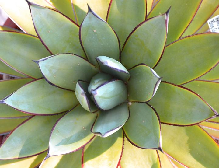 Cactus-47